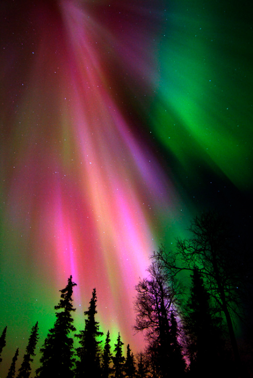 Northern Lights in Levi Finland