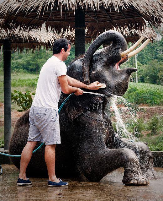 таиланд-слоненок